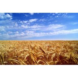 Международный опыт аутсорсинга в агросекторе. Спрос и предложение в украинском агробизнесе