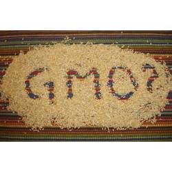 Аграрии требуют, чтобы Украина разрешила выращивать ГМО