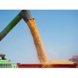 В Украине на 7 сентября намолочено 26,29 млн. тонн зерна...