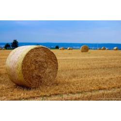 Фермеры Украины с беспокойством оценивают перспективы...