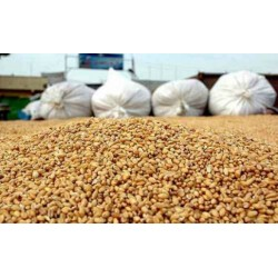 В Украине необходимо отменить внутреннюю сертификацию зерна