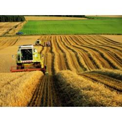 У нас можно приобрести лучшую технику для сельского хозяйства